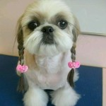 Amazing dog hair styles