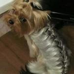 dogs hairdo1