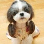 dogs hairdo10