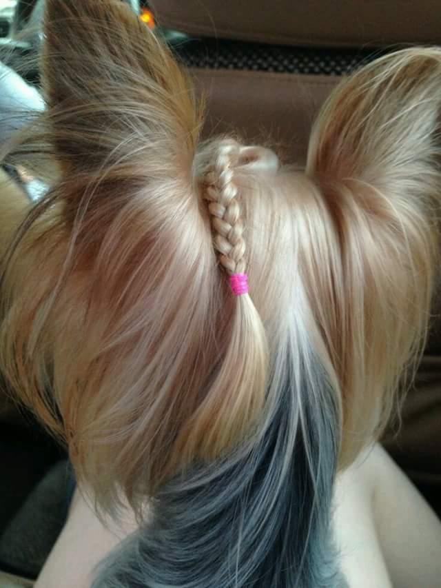 Lovely Dog Hairdos