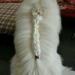 dogs hairdo3