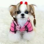 dogs hairdo4