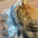dogs hairdo6