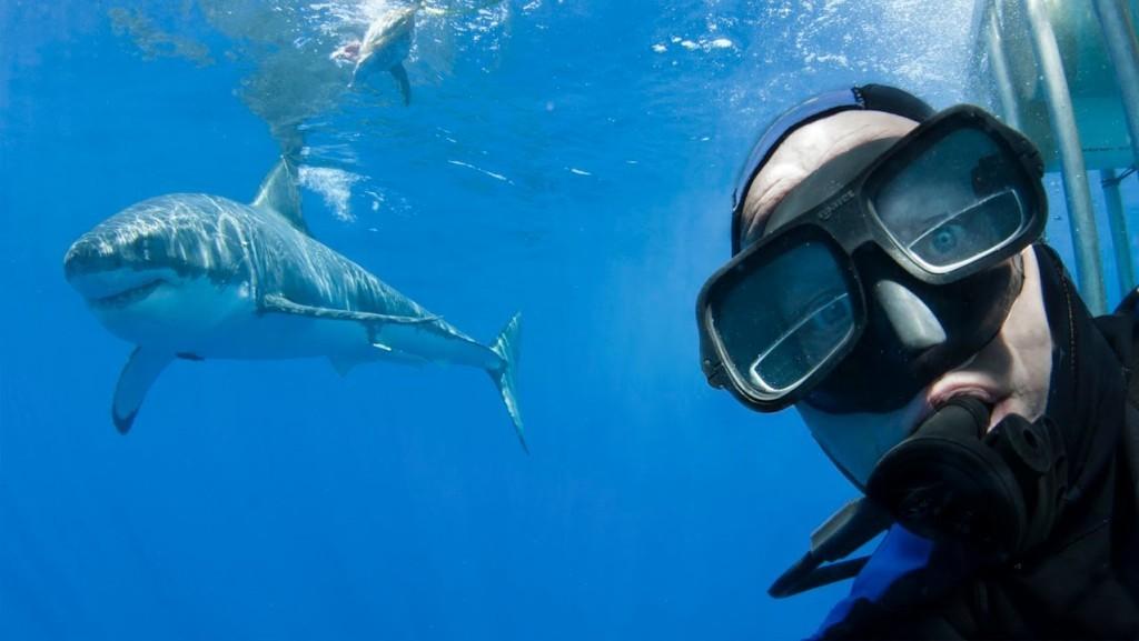 A brave scuba diver