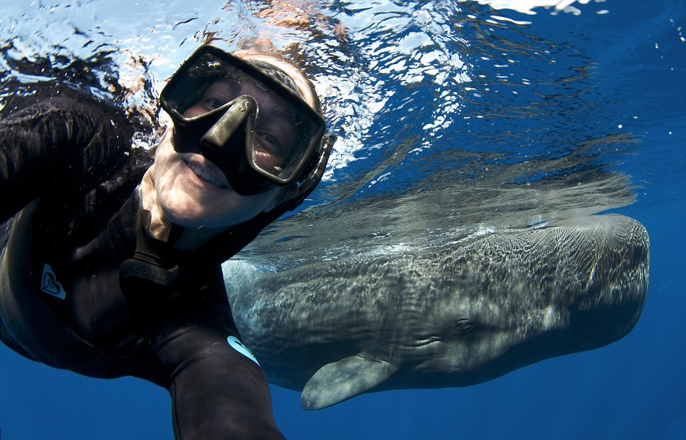 A whale lover