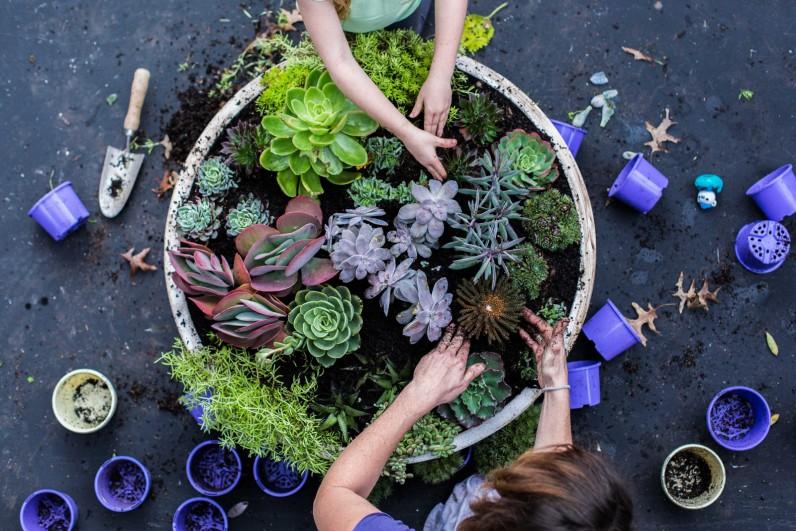 Make a Coral Reef Garden, Image by: Hannah Mccowatt