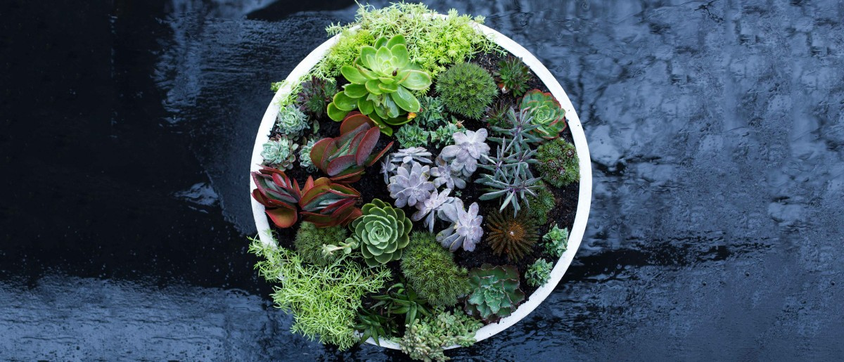 Make a Coral Reef Garden