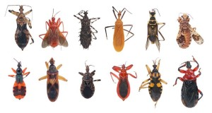 creepy-insects-variety